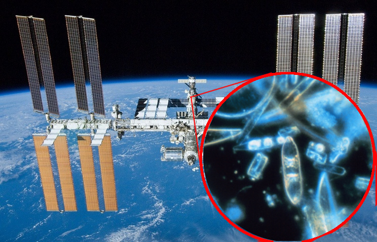 Plankton in space? Photo: ISS: NASA, Plankton: Prof. Gordon T. Taylor