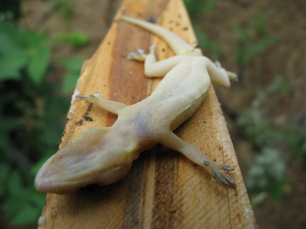 Sad news for space geckos. Photo: Flickr user Santhan Naidoo, CC BY 2.0