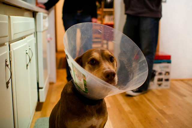 Sad Puppy; Photo: Flickr user Geoff Stearns, CC BY 2.0
