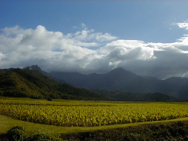 A farm in Hawaii; Photo:Flickr user Rod Ramsey, CC BY  2.0