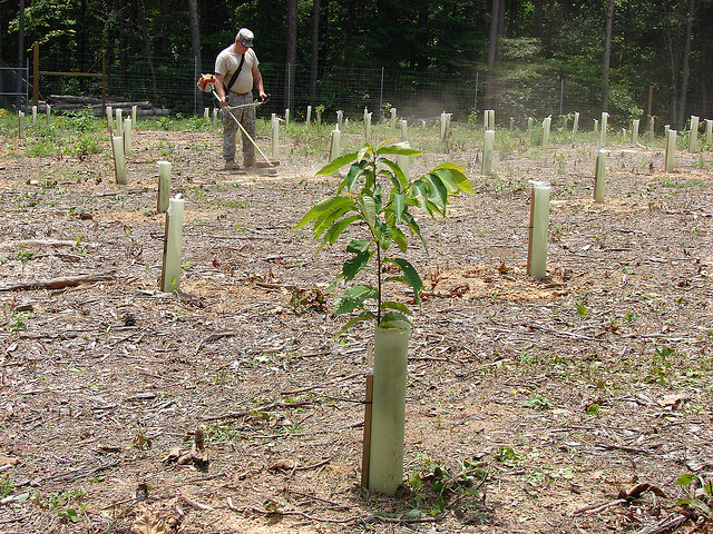 Keeping hope alive | Photo: US Army Environmental Command, CC BY 2.0